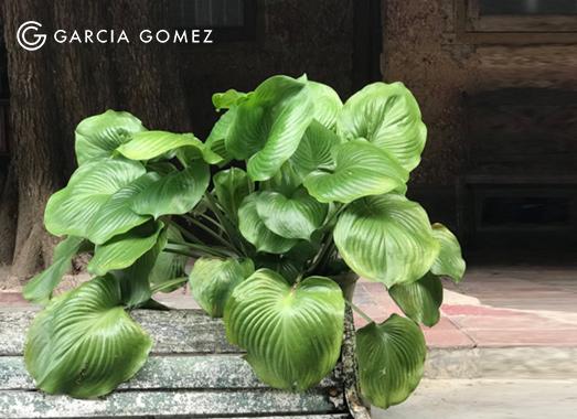 Energy-Healing-Garcia-Gomez-